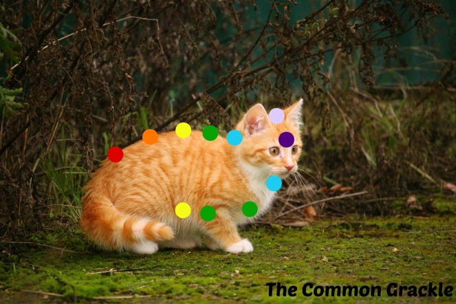 chakra_cat