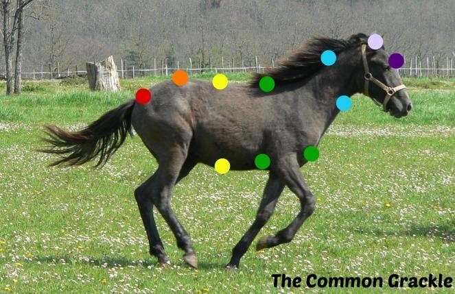 chakra_horse