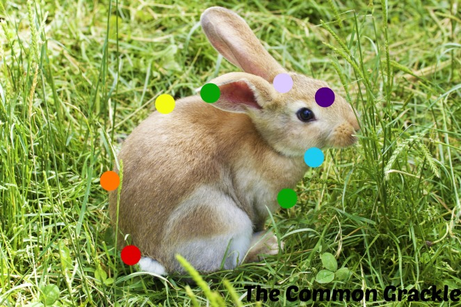 chakra_rabbit
